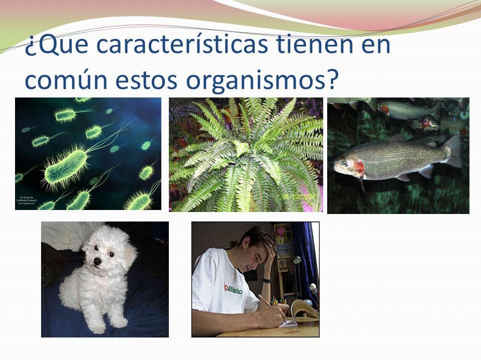 ¿Que características tienen en común estos organismos?