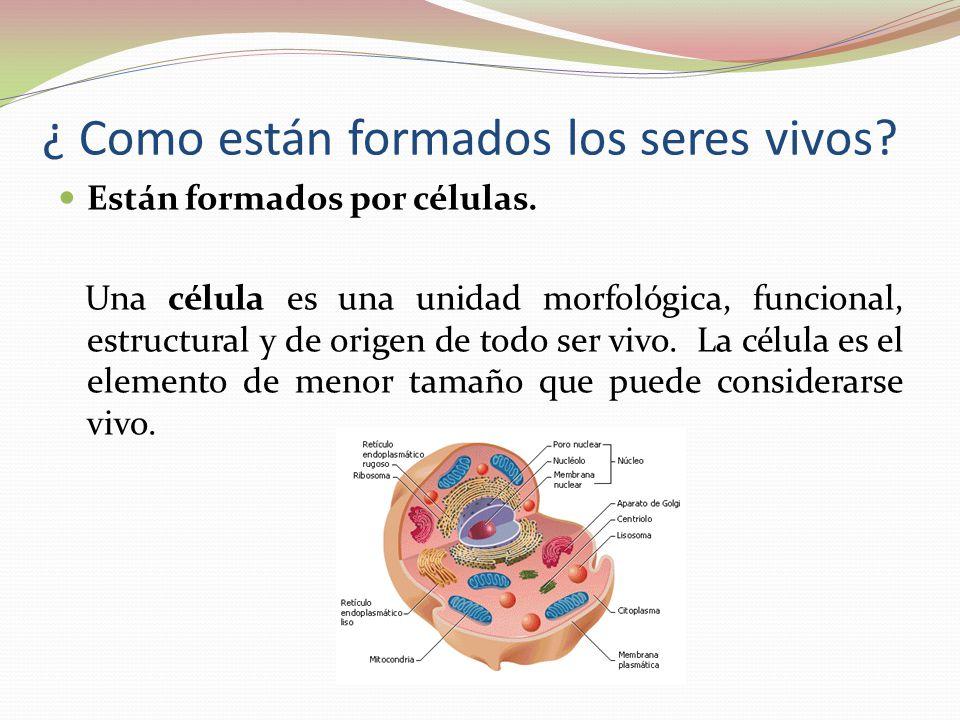 ¿ Como están formados los seres vivos? Están formados por células. Una célula es una unidad morfológica, funcional, estructural y de origen de todo se