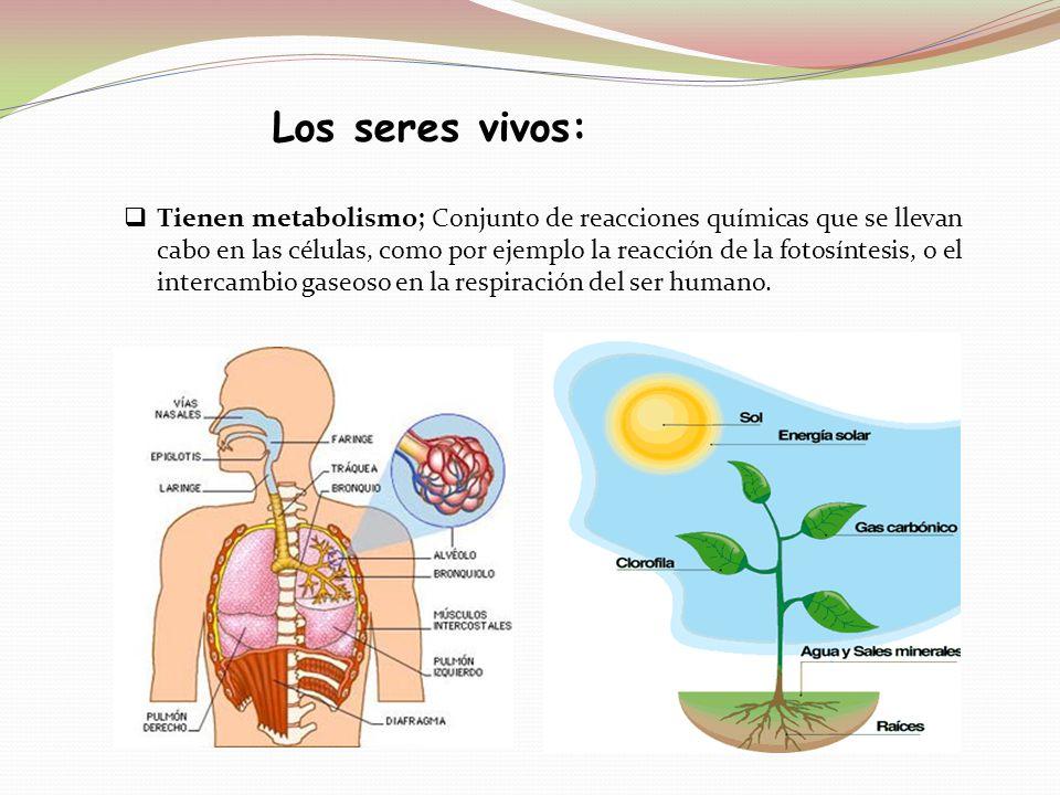 Tienen metabolismo; Conjunto de reacciones químicas que se llevan cabo en las células, como por ejemplo la reacción de la fotosíntesis, o el intercamb