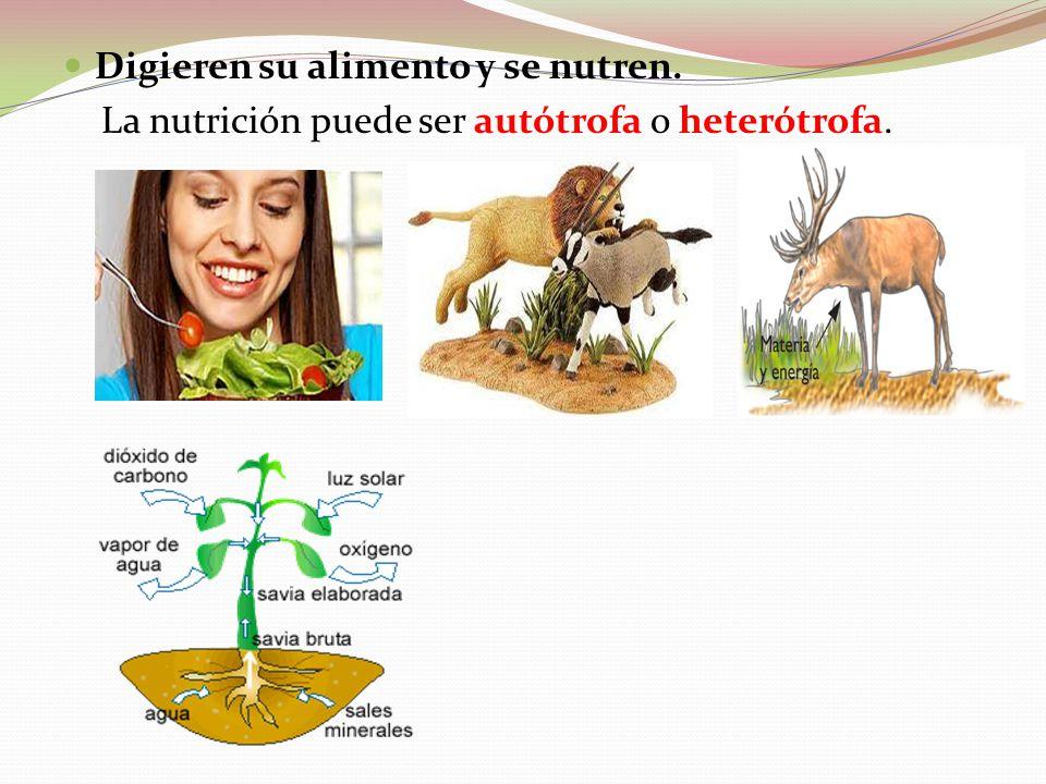 Digieren su alimento y se nutren. La nutrición puede ser autótrofa o heterótrofa.