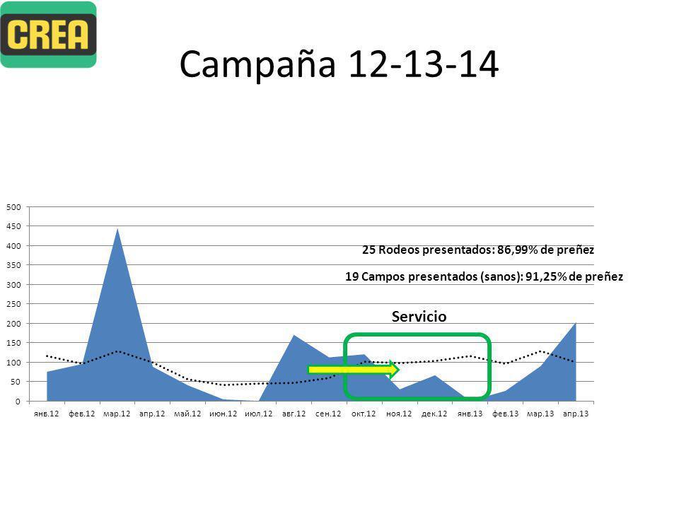 Campaña 12-13-14 Servicio 25 Rodeos presentados: 86,99% de preñez 19 Campos presentados (sanos): 91,25% de preñez