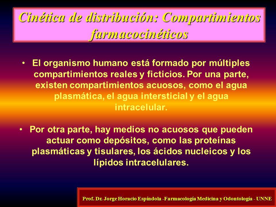 Cinética de distribución: Compartimientos farmacocinéticos El organismo humano está formado por múltiples compartimientos reales y ficticios. Por una