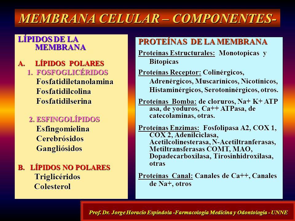 MEMBRANA CELULAR CELULAR – COMPONENTES- LÍPIDOS DE LA MEMBRANA A.LÍPIDOS A.LÍPIDOS POLARES 1. FOSFOGLICÉRIDOS Fosfatidiletanolamina Fosfatidilcolina F