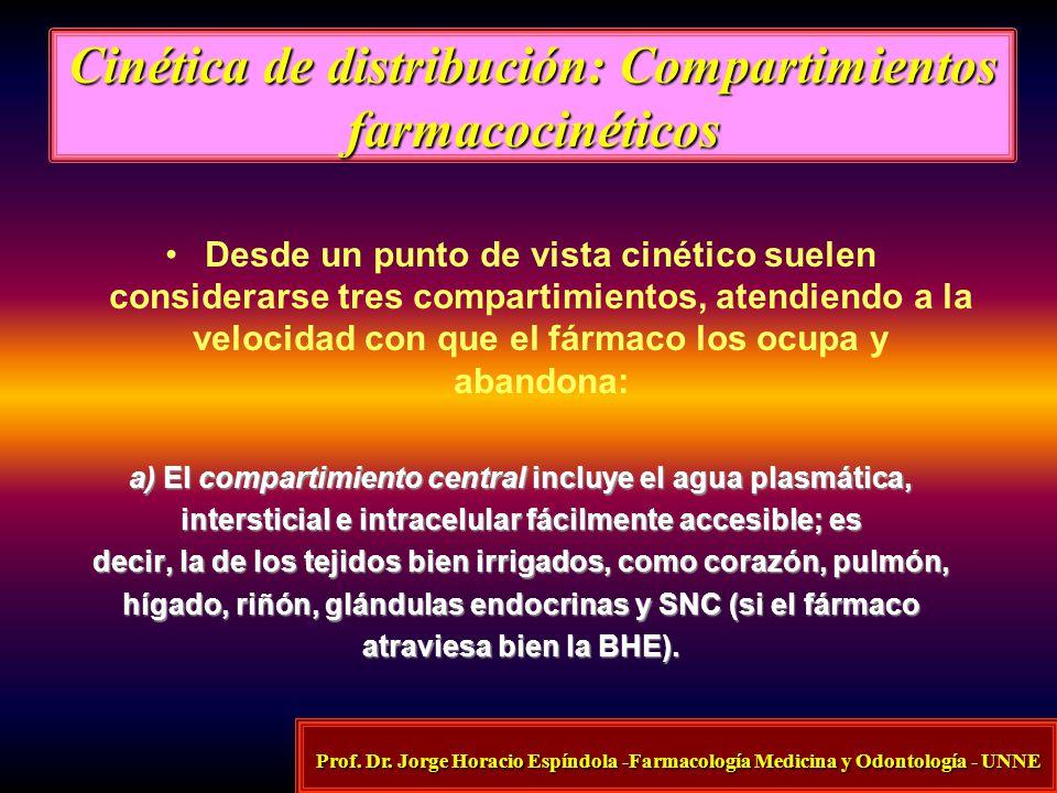 Cinética de distribución: Compartimientos farmacocinéticos Desde un punto de vista cinético suelen considerarse tres compartimientos, atendiendo a la