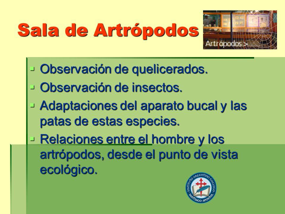 Sala de Artrópodos Observación de quelicerados. Observación de quelicerados. Observación de insectos. Observación de insectos. Adaptaciones del aparat