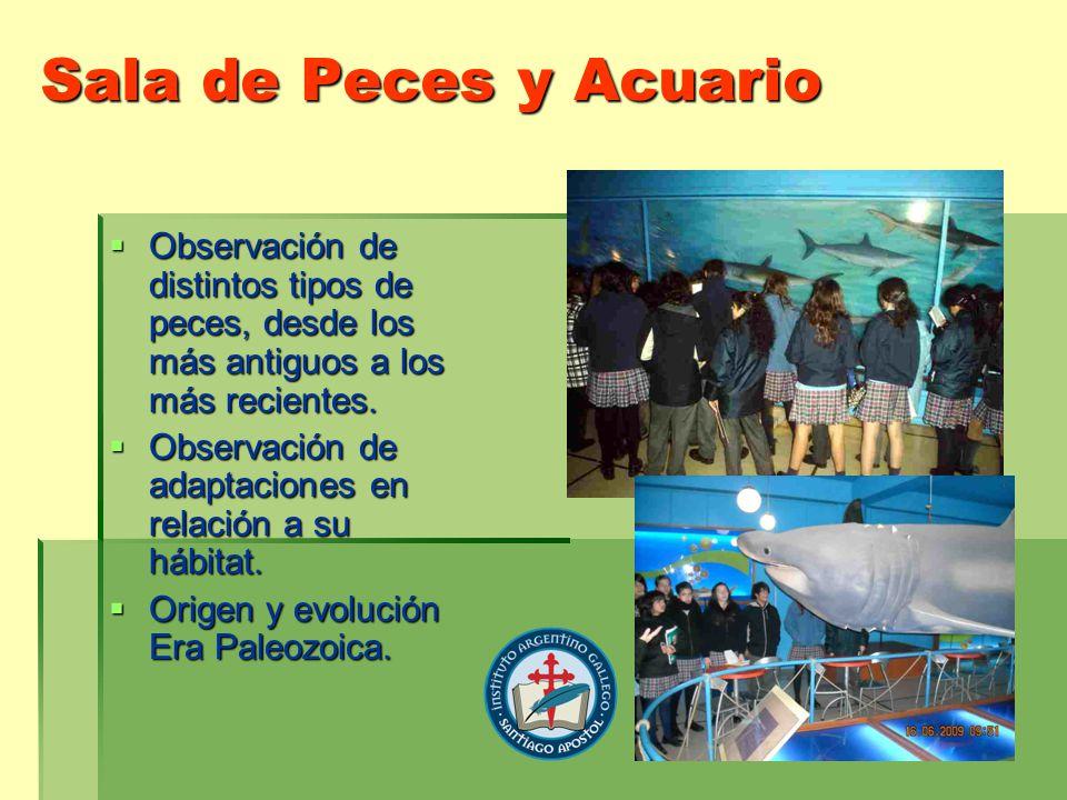 Sala de Peces y Acuario Observación de distintos tipos de peces, desde los más antiguos a los más recientes. Observación de distintos tipos de peces,