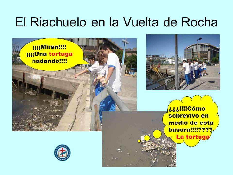 El Riachuelo en la Vuelta de Rocha ¿¿¿!!!!Cómo sobrevivo en medio de esta basura!!!!???? La tortuga ¡¡¡¡Miren!!!! ¡¡¡¡Una tortuga nadando!!!!