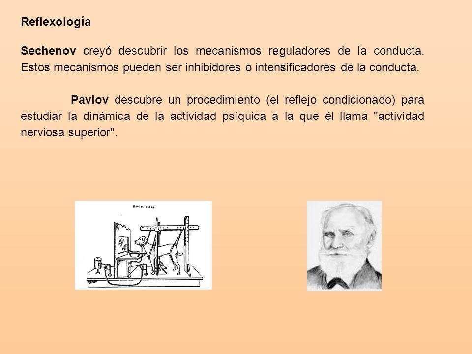 Reflexología Sechenov creyó descubrir los mecanismos reguladores de la conducta.