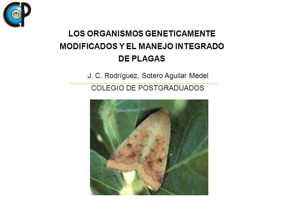 LOS ORGANISMOS GENETICAMENTE MODIFICADOS Y EL MANEJO INTEGRADO DE PLAGAS J. C. Rodríguez, Sotero Aguilar Medel COLEGIO DE POSTGRADUADOS