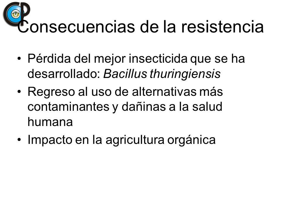 Consecuencias de la resistencia Pérdida del mejor insecticida que se ha desarrollado: Bacillus thuringiensis Regreso al uso de alternativas más contam