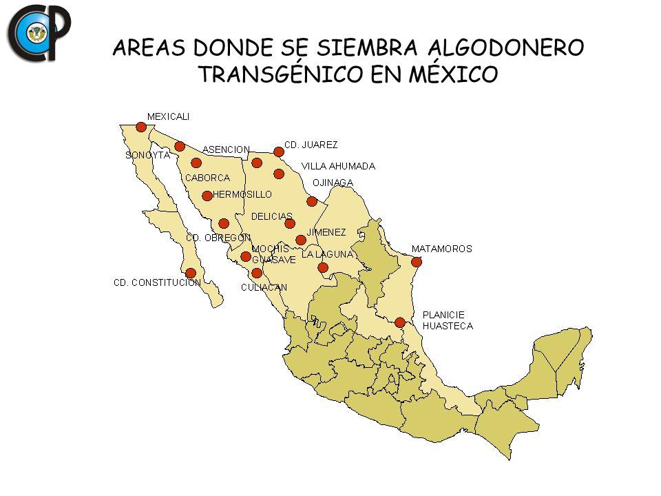AREAS DONDE SE SIEMBRA ALGODONERO TRANSGÉNICO EN MÉXICO
