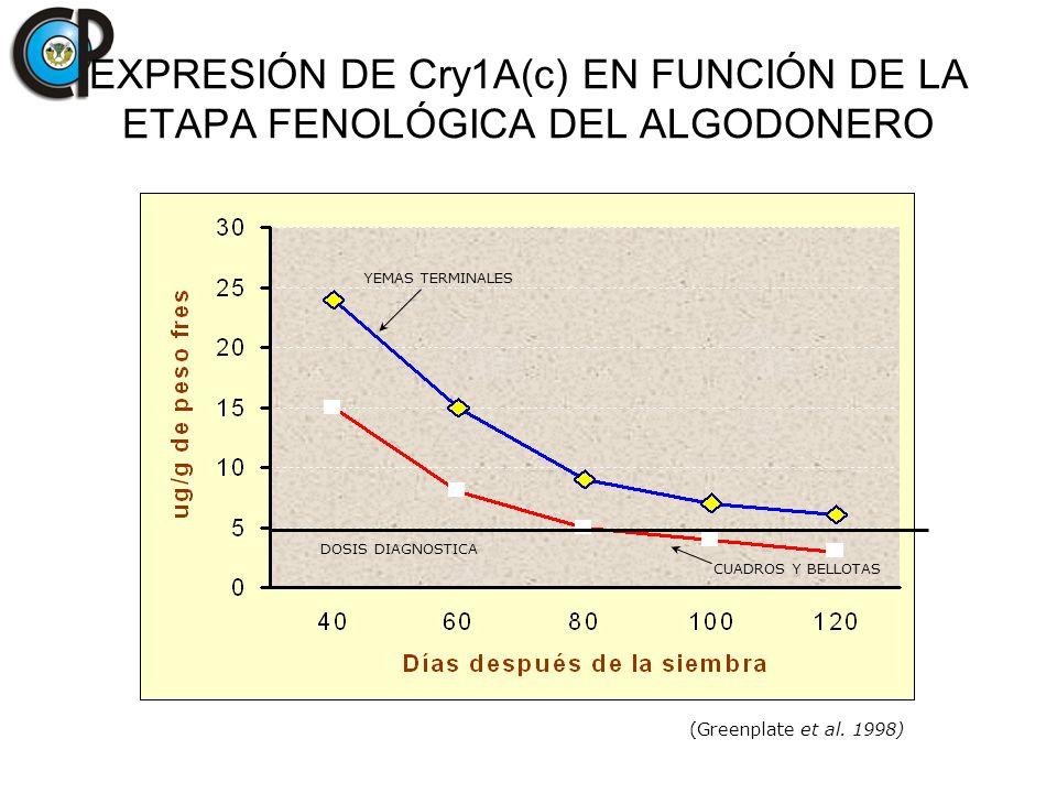 EXPRESIÓN DE Cry1A(c) EN FUNCIÓN DE LA ETAPA FENOLÓGICA DEL ALGODONERO DOSIS DIAGNOSTICA YEMAS TERMINALES CUADROS Y BELLOTAS (Greenplate et al. 1998)