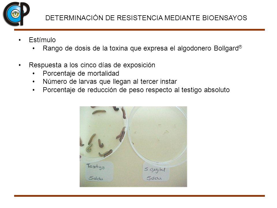 DETERMINACIÓN DE RESISTENCIA MEDIANTE BIOENSAYOS Estímulo Rango de dosis de la toxina que expresa el algodonero Bollgard ® Respuesta a los cinco días