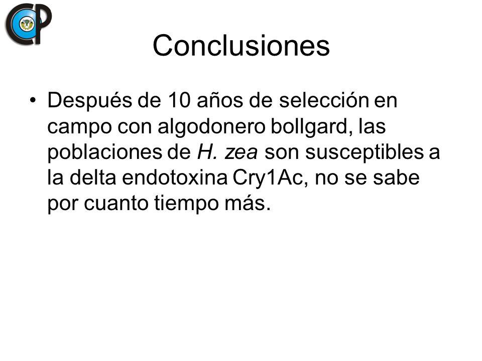 Conclusiones Después de 10 años de selección en campo con algodonero bollgard, las poblaciones de H. zea son susceptibles a la delta endotoxina Cry1Ac