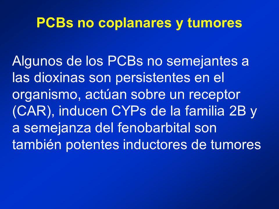 PCBs no coplanares y tumores Algunos de los PCBs no semejantes a las dioxinas son persistentes en el organismo, actúan sobre un receptor (CAR), inducen CYPs de la familia 2B y a semejanza del fenobarbital son también potentes inductores de tumores