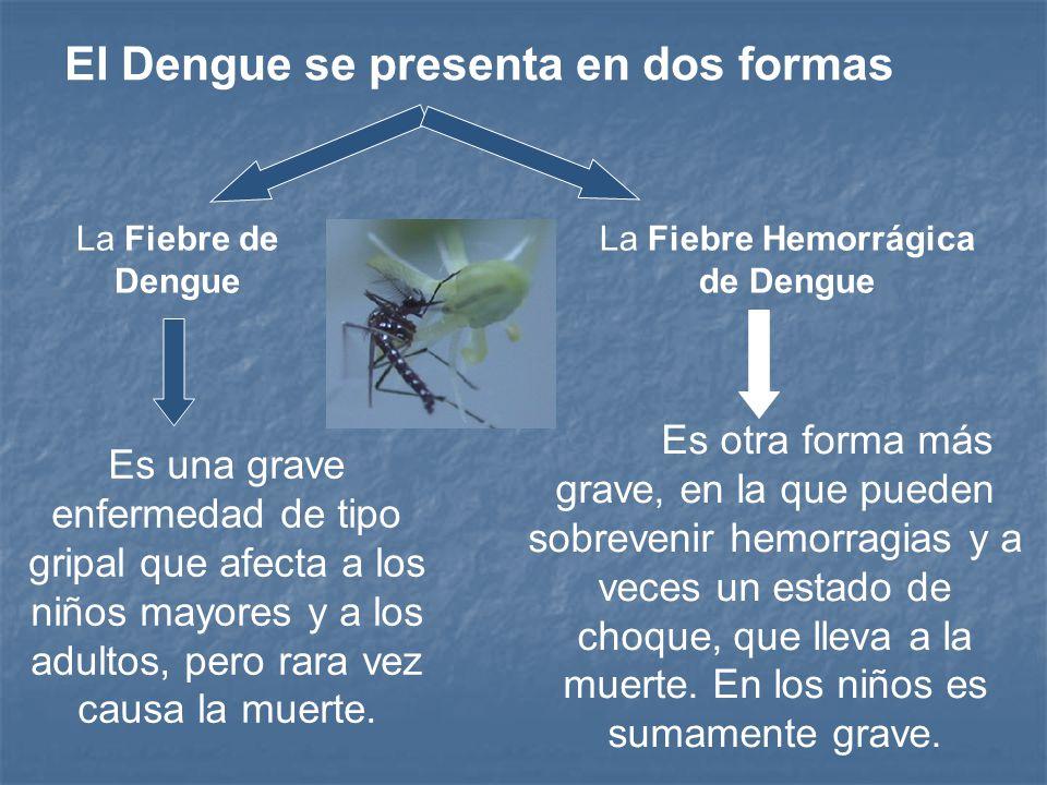 La enfermedad se propaga por la picadura de un hembra de Aedes aegypti infectada, que ha adquirido el virus causal al ingerir la sangre de una persona con dengue.