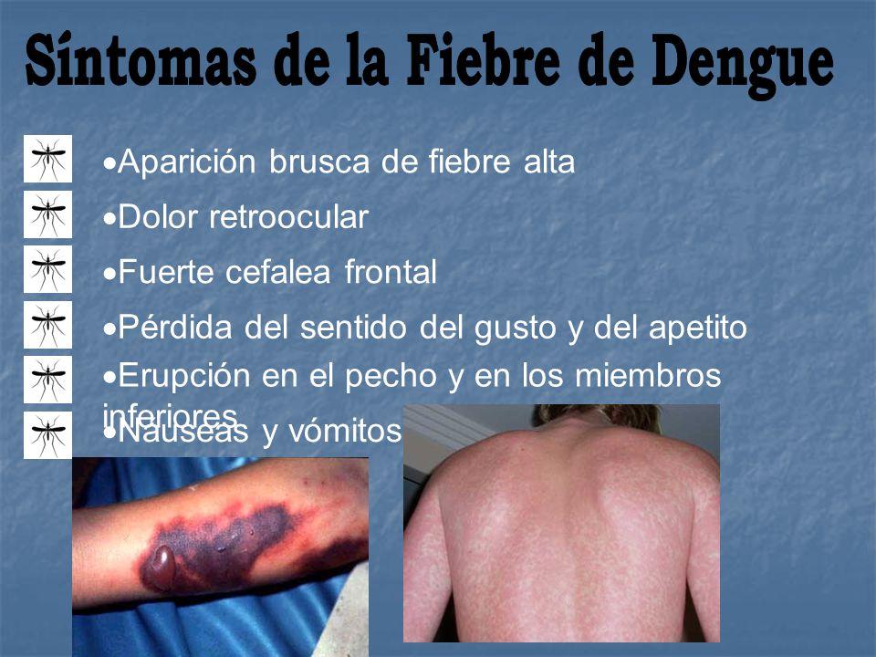 S íntomas análogos a los de la fiebre de dengue.P iel pálida, fría o pegajosa.