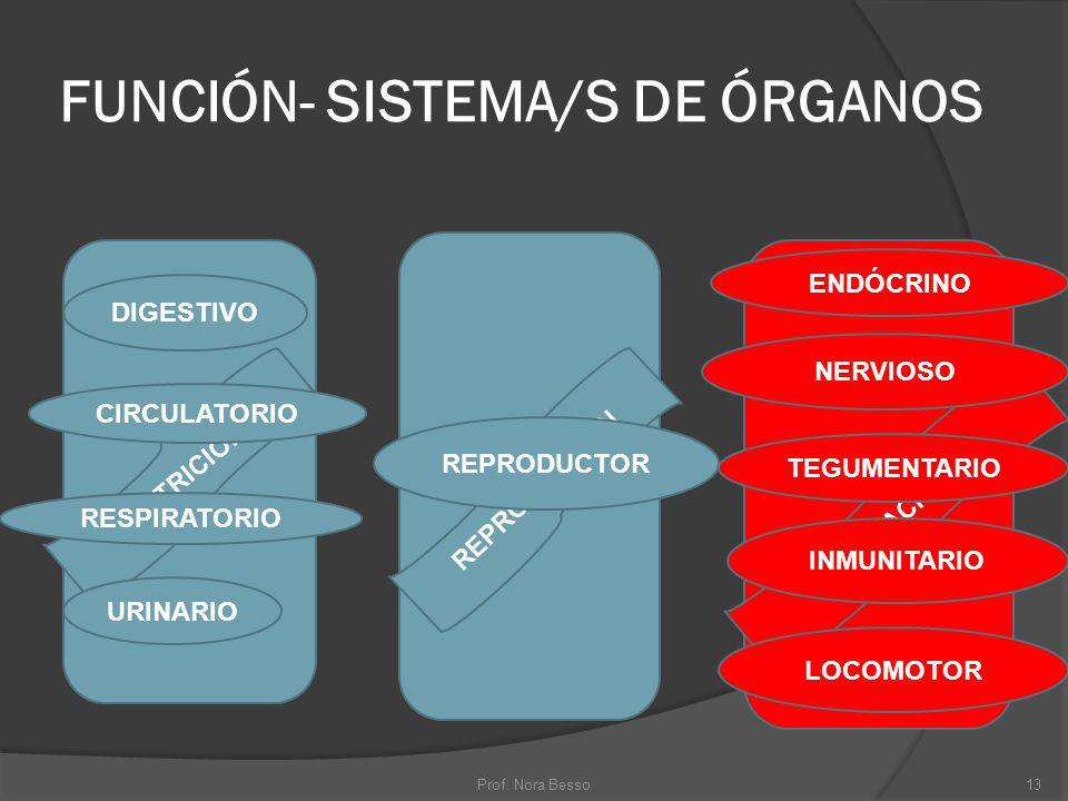 FUNCIÓN- SISTEMA/S DE ÓRGANOS NUTRICIÓN REPRODUCCIÓN DIGESTIVO CIRCULATORIO RESPIRATORIO URINARIO REPRODUCTOR RELACIÓN ENDÓCRINO NERVIOSO TEGUMENTARIO