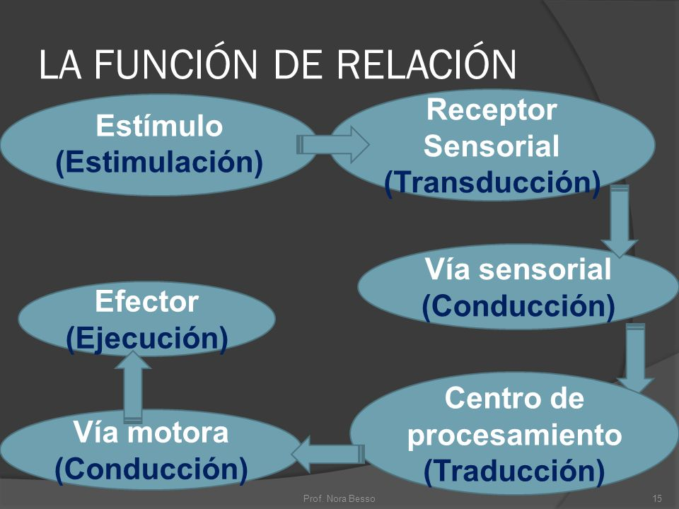 LA FUNCIÓN DE RELACIÓN Estímulo (Estimulación) Receptor Sensorial (Transducción) Efector (Ejecución) Vía sensorial (Conducción) Vía motora (Conducción