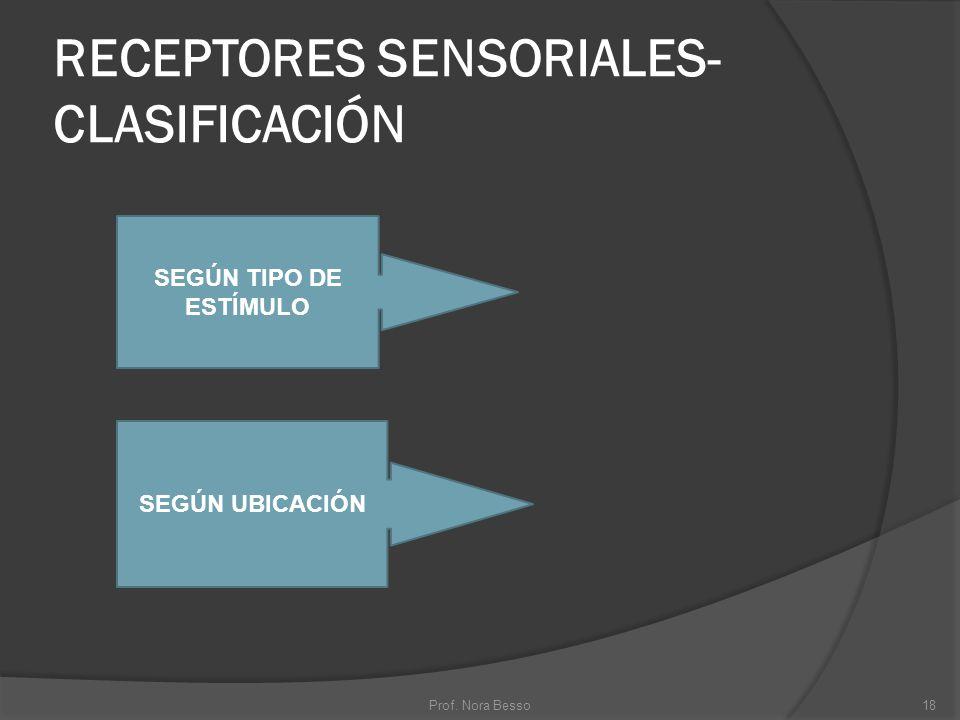 RECEPTORES SENSORIALES- CLASIFICACIÓN 18Prof. Nora Besso SEGÚN TIPO DE ESTÍMULO SEGÚN UBICACIÓN
