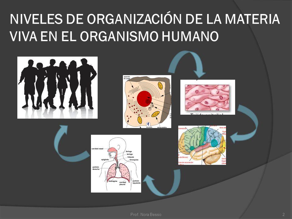 NIVELES DE ORGANIZACIÓN DE LA MATERIA VIVA EN EL ORGANISMO HUMANO 2Prof. Nora Besso