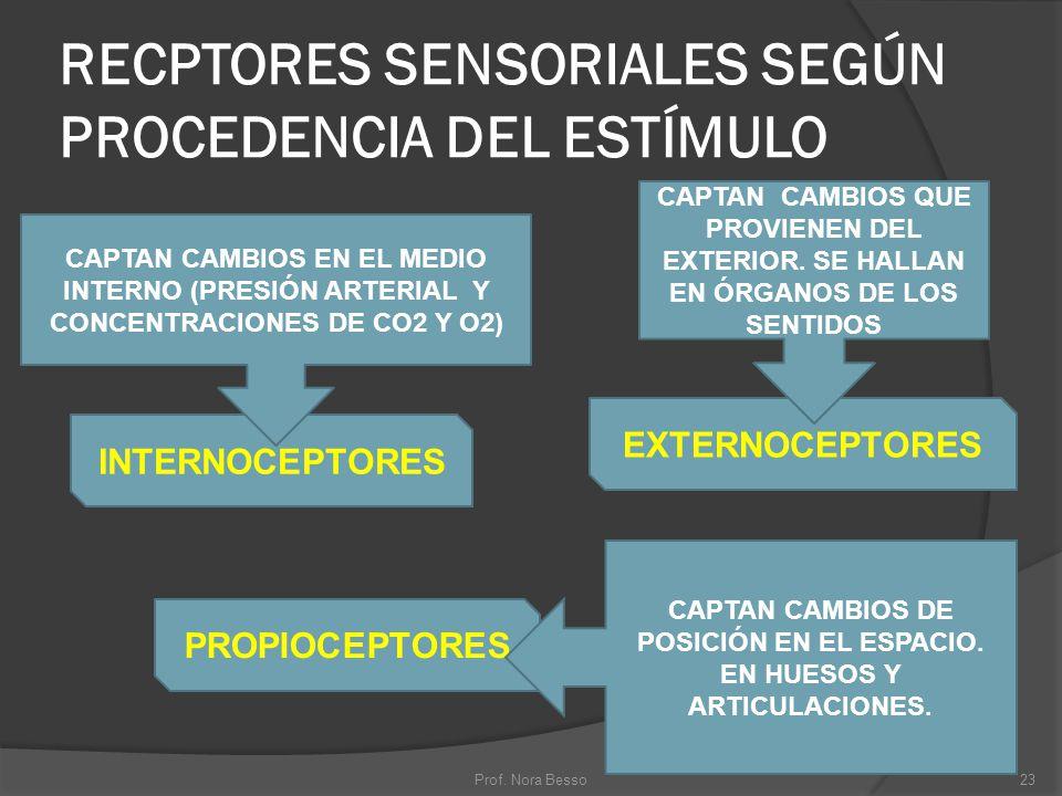 RECPTORES SENSORIALES SEGÚN PROCEDENCIA DEL ESTÍMULO INTERNOCEPTORES PROPIOCEPTORES EXTERNOCEPTORES CAPTAN CAMBIOS QUE PROVIENEN DEL EXTERIOR. SE HALL