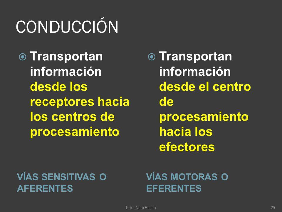 CONDUCCIÓN VÍAS SENSITIVAS O AFERENTES VÍAS MOTORAS O EFERENTES Transportan información desde los receptores hacia los centros de procesamiento Transp