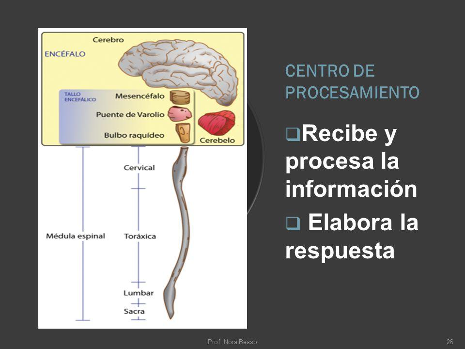 CENTRO DE PROCESAMIENTO Recibe y procesa la información Elabora la respuesta Prof. Nora Besso26