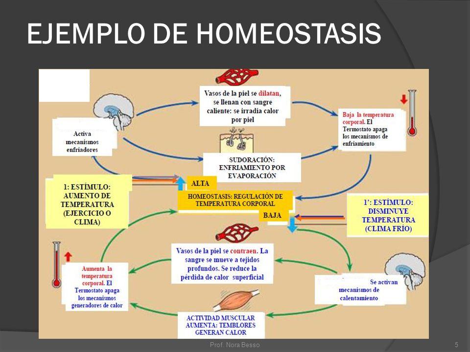 EJEMPLO DE HOMEOSTASIS 5Prof. Nora Besso