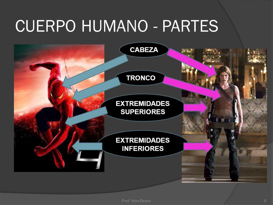 CUERPO HUMANO - PARTES CABEZA TRONCO EXTREMIDADES SUPERIORES EXTREMIDADES INFERIORES 6Prof. Nora Besso