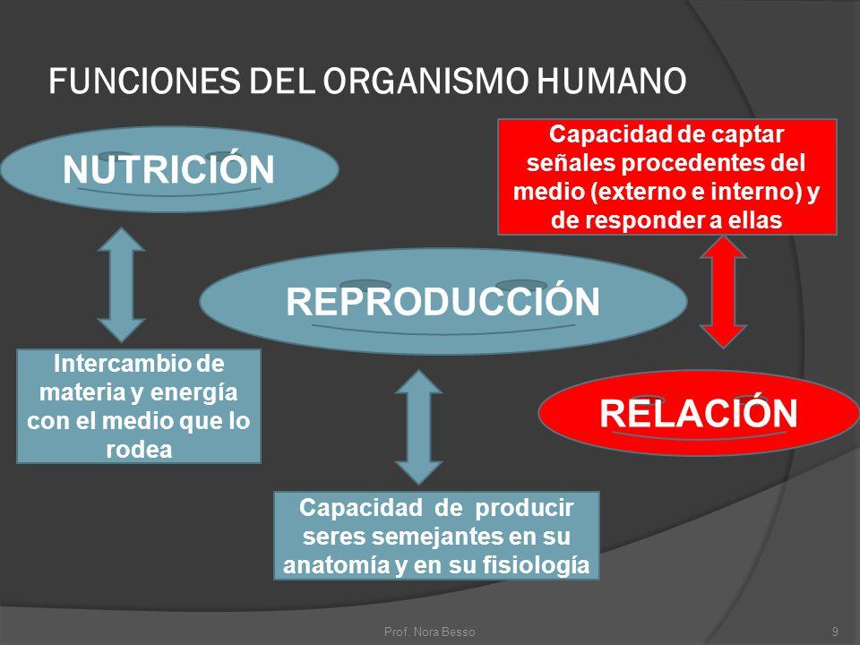 FUNCIONES DEL ORGANISMO HUMANO NUTRICIÓN RELACIÓN REPRODUCCIÓN Intercambio de materia y energía con el medio que lo rodea Capacidad de captar señales