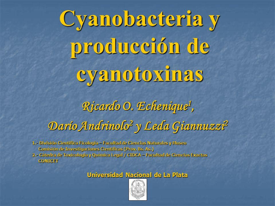 Cyanobacteria y producción de cyanotoxinas Ricardo O. Echenique 1, Darío Andrinolo 2 y Leda Giannuzzi 2 1.- División Científica Ficología – Facultad d