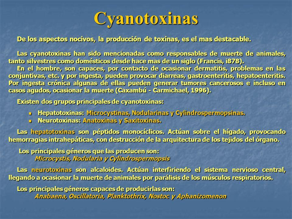 Cyanotoxinas De los aspectos nocivos, la producción de toxinas, es el mas destacable. Las cyanotoxinas han sido mencionadas como responsables de muert