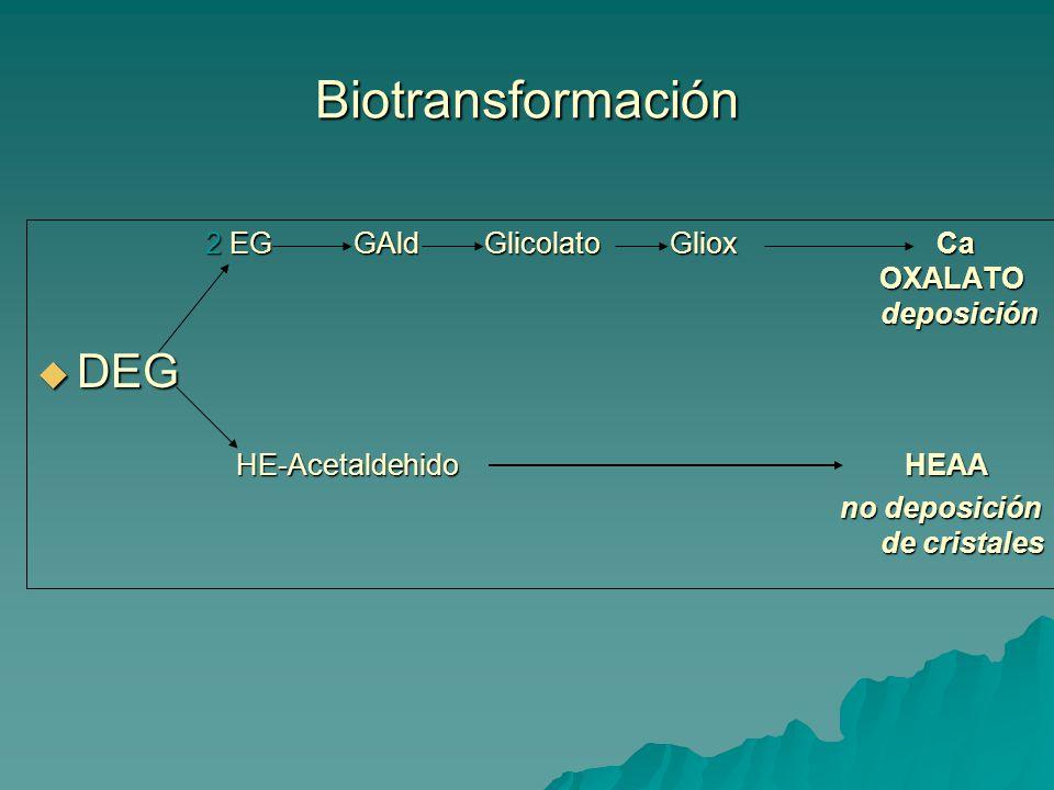 Biotransformación 2 EG GAld Glicolato Gliox Ca OXALATO deposición 2 EG GAld Glicolato Gliox Ca OXALATO deposición DEG DEG HE-Acetaldehido HEAA HE-Acetaldehido HEAA no deposición de cristales no deposición de cristales