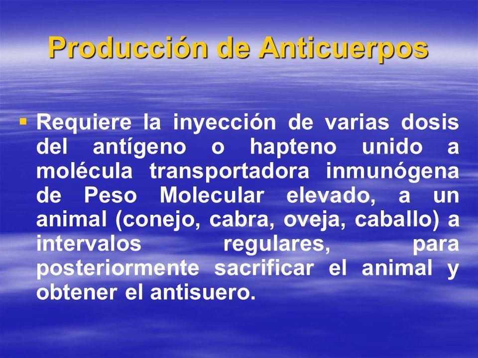 Producción de Anticuerpos Requiere la inyección de varias dosis del antígeno o hapteno unido a molécula transportadora inmunógena de Peso Molecular elevado, a un animal (conejo, cabra, oveja, caballo) a intervalos regulares, para posteriormente sacrificar el animal y obtener el antisuero.