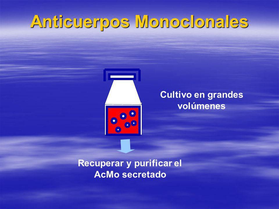 Anticuerpos Monoclonales Ventajas con respecto a los policlonales: Ventajas con respecto a los policlonales: –Alta especificidad, reconocen un único lugar antigénico.