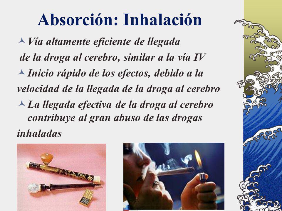 Absorción: Inhalación Vía altamente eficiente de llegada de la droga al cerebro, similar a la vía IV Inicio rápido de los efectos, debido a la velocid
