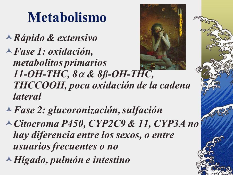 Metabolismo Rápido & extensivo Fase 1: oxidación, metabolitos primarios 11-OH-THC, 8 & 8ß-OH-THC, THCCOOH, poca oxidación de la cadena lateral Fase 2: