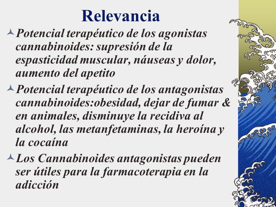 Relevancia Potencial terapéutico de los agonistas cannabinoides: supresión de la espasticidad muscular, náuseas y dolor, aumento del apetito Potencial