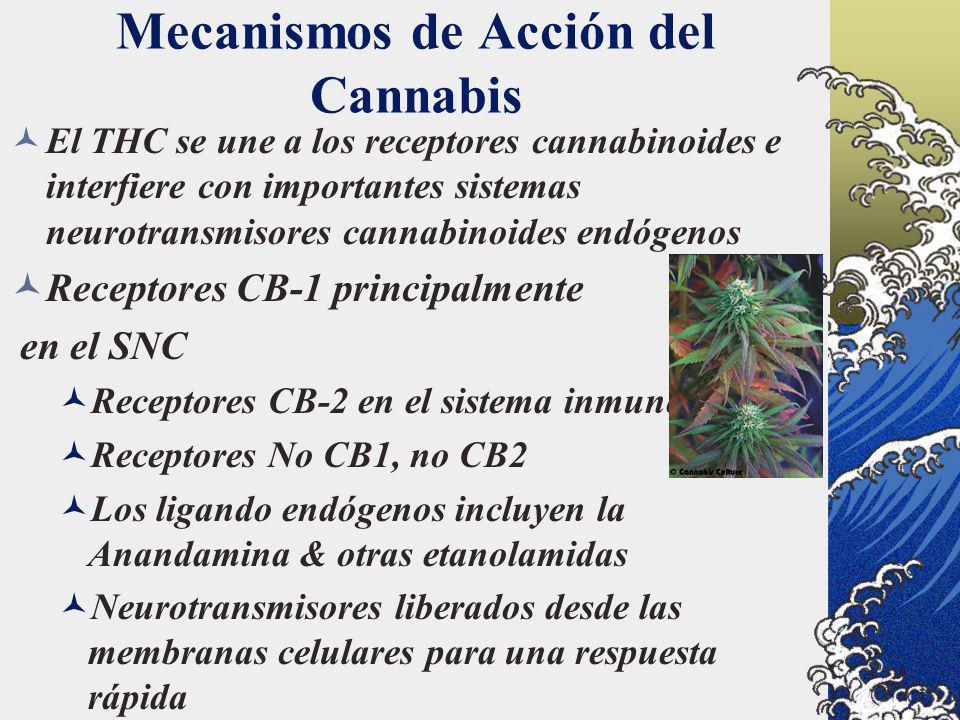 Mecanismos de Acción del Cannabis La distribución del CB1 en el SNC concuerda con la deficiencia psicotrópica de cognición, la memoria, el control motriz, y la percepción de la recompensa y el dolor El sistema cannabinoide endógeno también juega un papel importante en el apetito, el control hormonal, la implantación embrionaria y la modulación de la actividad de otros importantes neurotransmisores El CB1 se encuentra también en los testículos y el músculo liso vascular