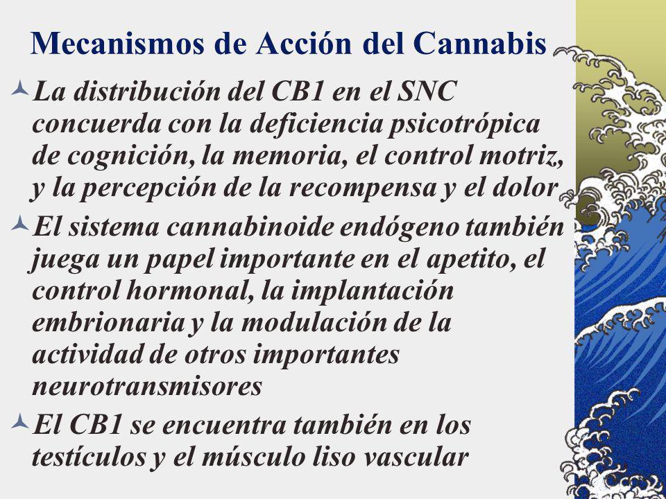 Mecanismos de Acción del Cannabis La distribución del CB1 en el SNC concuerda con la deficiencia psicotrópica de cognición, la memoria, el control mot