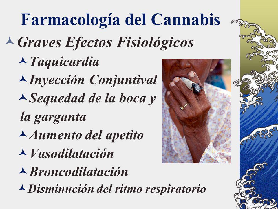 Farmacología del Cannabis Graves Efectos Fisiológicos Taquicardia Inyección Conjuntival Sequedad de la boca y la garganta Aumento del apetito Vasodila