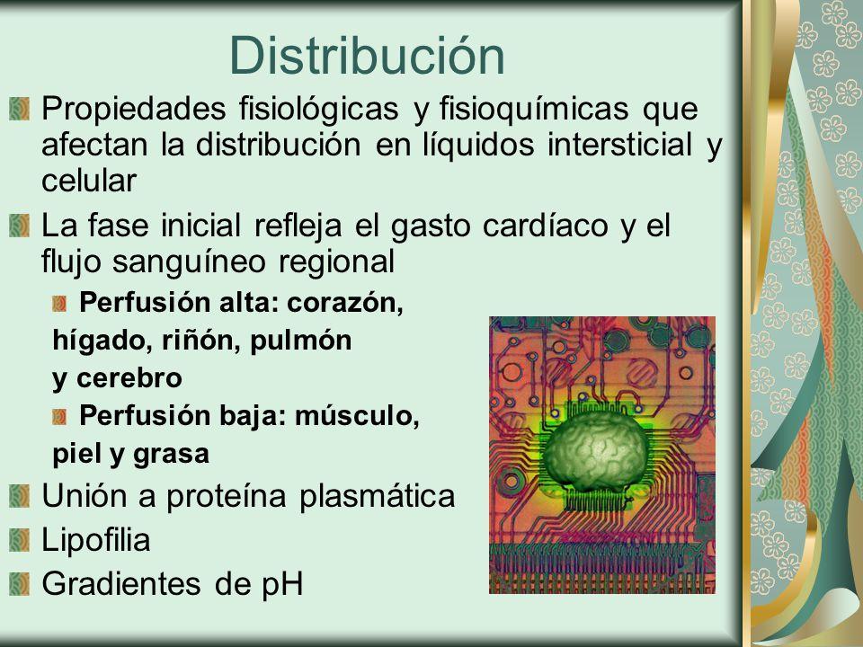 Distribución Propiedades fisiológicas y fisioquímicas que afectan la distribución en líquidos intersticial y celular La fase inicial refleja el gasto cardíaco y el flujo sanguíneo regional Perfusión alta: corazón, hígado, riñón, pulmón y cerebro Perfusión baja: músculo, piel y grasa Unión a proteína plasmática Lipofilia Gradientes de pH