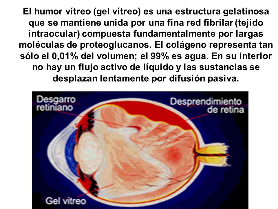 El humor vítreo (gel vítreo) es una estructura gelatinosa que se mantiene unida por una fina red fibrilar (tejido intraocular) compuesta fundamentalme