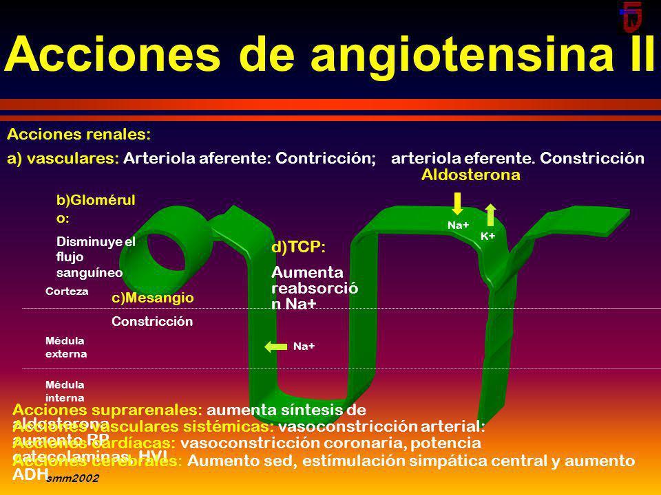 smm2002 VASOCONSTRICCIONVASODILATACION Kininógeno Kalikreína Fragmentos Inactivos Angiotensinógeno Angiotensina I RENINA Kininas II ALDOSTERONA SIMPAT
