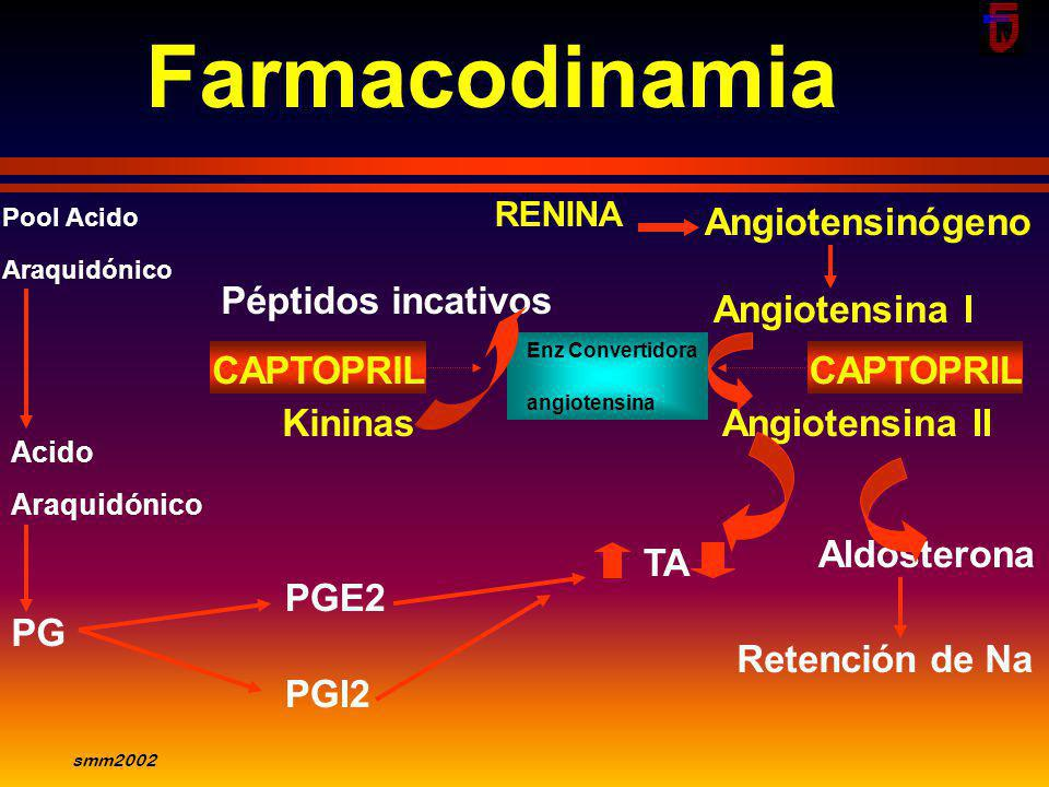 smm2002 Acciones de angiotensina II Acciones renales: a) vasculares: Arteriola aferente: Contricción; arteriola eferente. Constricción b)Glomérul o :