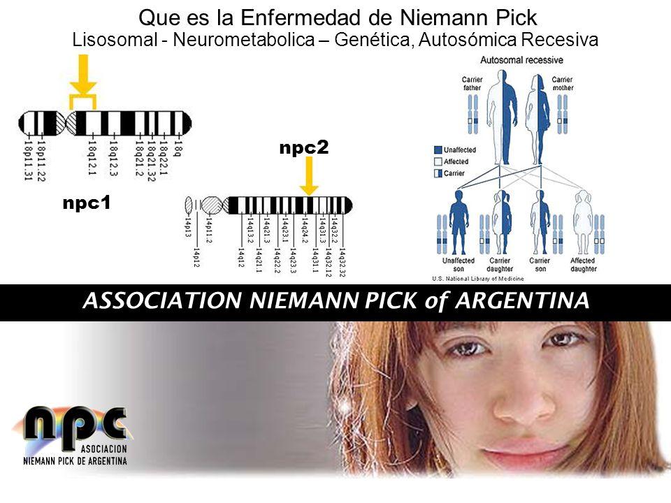 ASSOCIATION NIEMANN PICK of ARGENTINA Que es la Enfermedad de Niemann Pick npc1 npc2 Lisosomal - Neurometabolica – Genética, Autosómica Recesiva