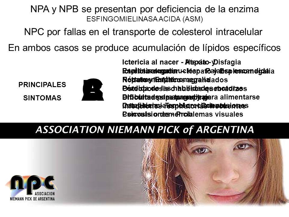 ASSOCIATION NIEMANN PICK of ARGENTINA NPA y NPB se presentan por deficiencia de la enzima ESFINGOMIELINASA ACIDA (ASM) NPC por fallas en el transporte