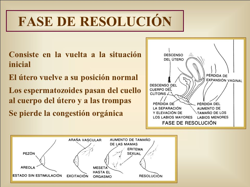 FASE DE RESOLUCIÓN Consiste en la vuelta a la situación inicial El útero vuelve a su posición normal Los espermatozoides pasan del cuello al cuerpo del útero y a las trompas Se pierde la congestión orgánica