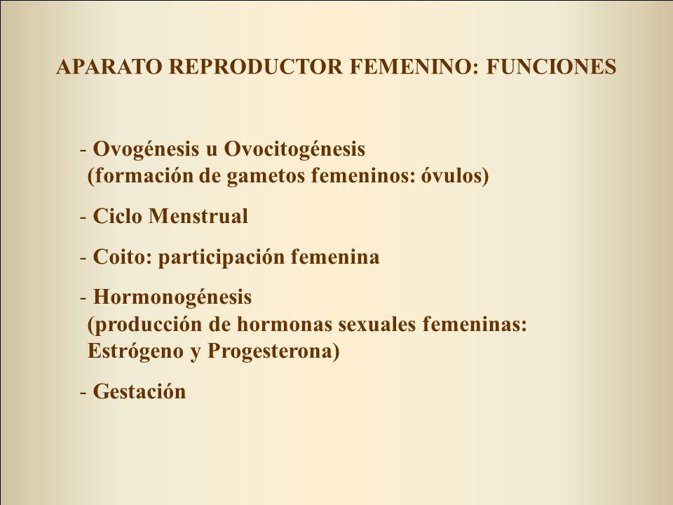 APARATO REPRODUCTOR FEMENINO: FUNCIONES - Ovogénesis u Ovocitogénesis (formación de gametos femeninos: óvulos) - Ciclo Menstrual - Coito: participación femenina - Hormonogénesis (producción de hormonas sexuales femeninas: Estrógeno y Progesterona) - Gestación